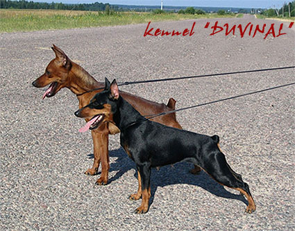 kennel Duvinal